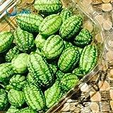 20 Samen Mini Wassermelone Strauch Essbar Gemüse