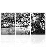 HHJXBZ Leinwanddrucke, Wandkunst Schwarz Und Weiß Großen Alten Baum Bilder Sonnenuntergang Sonnenaufgang See Foto Leinwand Drucke Home Decor 35x50cmx3 gerüst