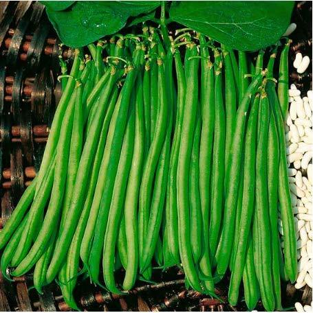 Tomasa Gartensamen- Bio Bohnen Gemüsesamen Vier Jahreszeiten Bohnen Samen Gemüse Saatgut Stangenbohnensamen winterhart mehrjährig Filetbohnen Samen