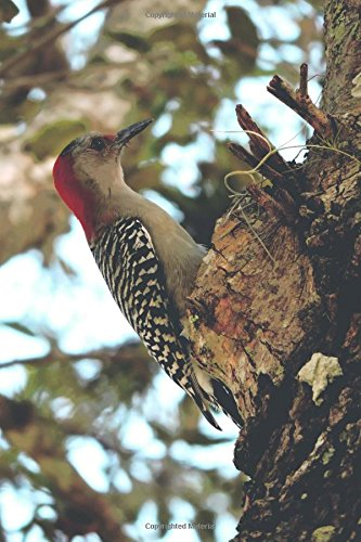 Awesome Red-Headed Woodpecker in a Tree Bird Journal: 150 Page Lined Notebook/Diary -