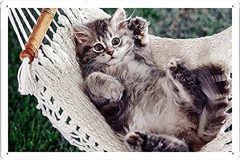 Plaque affiche de métal Affiche de Kitten