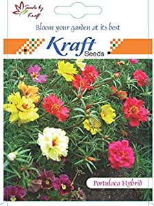 Portulaca Hybrid Flower Seeds by Kraft Seeds