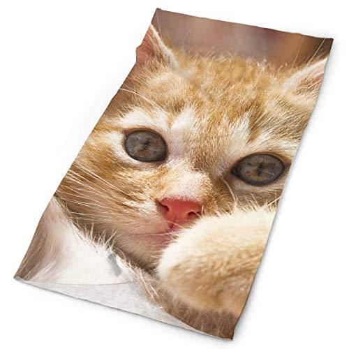 SHALLY Headbands Cute Kitty Headwear Bandana Sweatband Gaiter Head Wrap Mask Neck Outdoor Scarf Multicolor17 -