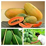 Portal Cool Papaya (Honig) F1 12 Samen-SVS-855- (Papaya Red Lady Hybrid F1), Obst