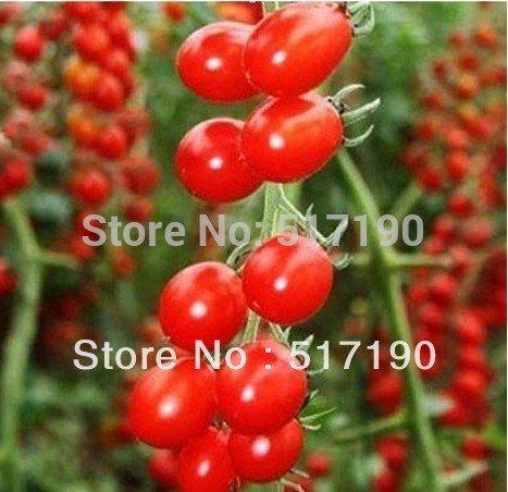 30pcs / sac rouge tomates poires graines de légumes pour le jardin de la maison DIY