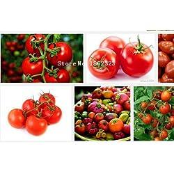 10pcs / bag Garten Bio-Pflanzen Erdnuss Samen, Gemüsesamen und auch Fruchtsamen