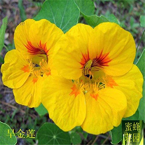Vente Top Mode d'été Exclus régulier Embellir Tempéré Plantes Balcon Petit Mini extérieur Sécheresse semences 20 graines sèches 1