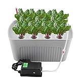 Zerodis Sistema de Cultivo Hidroponíco, Sistema de hidroponía de 6 Hoyos Caja de Cultivo sin Agua de Aguas Profundas para el hogar Interior 220V (11 Hoyos)