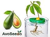 Avoseedo - Avocat à Faire Pousser- Cadeau Femme / Homme - Plantes Vertes d' Intérieur / Extérieur - Idee Décoration Maison - Kit Jouet Pour Enfants (Vert)
