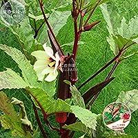 Semi ocra verde smeraldo non OGM BEST okra, Varietà dimensioni 2000 Heirloom