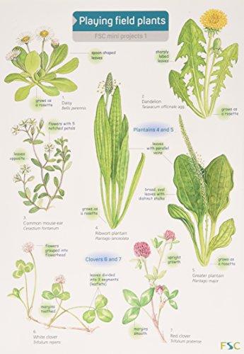 Playing Field Plants (FSC Mini Projects S.)