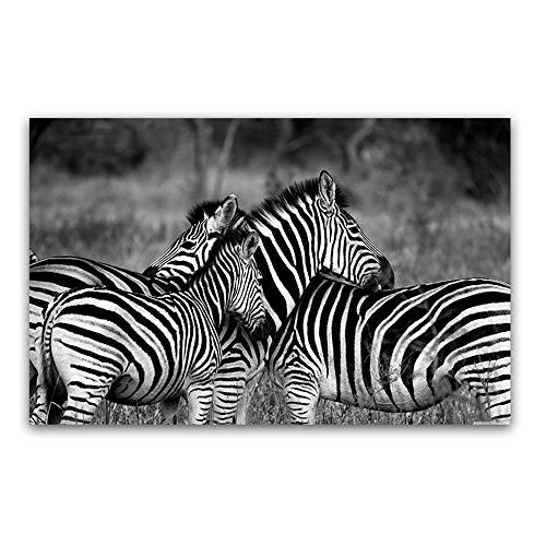 HD Drucke Leinwand Home Wall Art Decor Rahmenlose Zebra Schwarzweiß Gemälde Für Wohnzimmer Tier Poster,70x100cm