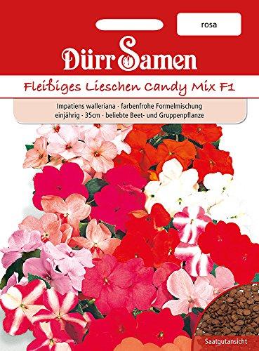 Dürr-Samen Fleißige Lieschen Candy F1 rosa