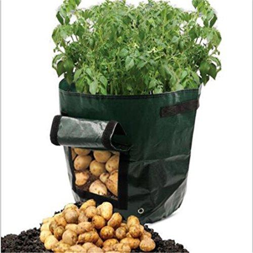 Kingus Kartoffel-Pflanzentopf mit Klettverschluss, für Fenster, Gemüse, Pflanzbeutel, Erdbeere, umweltfreundliche Materialien, Grün
