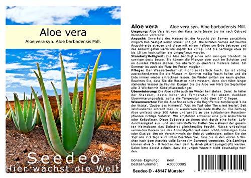 Seedeo® Aloe vera (Aloe vera syn. Aloe barbadensis) 15 Samen
