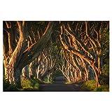 artboxONE Poster 60x40 cm Irland - The Dark Hedges von Künstler Jean Claude Castor