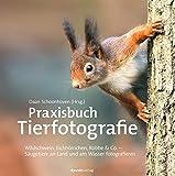 Praxisbuch Tierfotografie: Wildschwein, Eichhörnchen, Robbe & Co. ? Säugetiere an Land und am Wasser fotografieren -