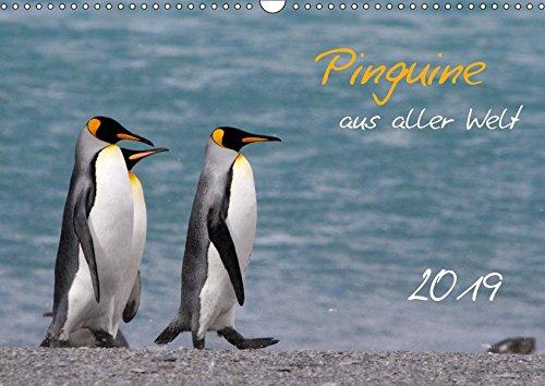 Pinguine aus aller Welt (Wandkalender 2019 DIN A3 quer): Wandkalender mit 13 Bildern (Monatskalender, 14 Seiten ) (CALVENDO Tiere)