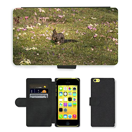 Just Mobile pour Hot Style Téléphone portable étui portefeuille en cuir PU avec fente pour carte//m00139840écureuil printemps Eat monde animal//Apple iPhone 5C