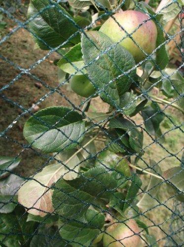 Nutley's Kitchen Gardens FLE08BN5 Filet anti-oiseaux tissé Vert 5 x 8 m