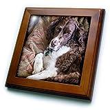 3dRose FT 208612_ 1USA Washington English Springer Spaniel auf Couch gerahmt Fliesen, 20,3x 20,3cm