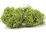 NaDeco Curly Moos grün 50g | Curlymoos | Tillandsia Moos | Deko Moos | Bastelmoos | Dekomoos | Bastel Moos | Moos zum Basteln