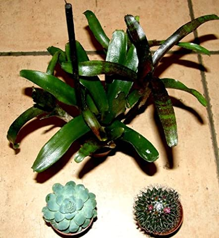 3 getopfte Sukkulenten + 3 Kakteen + 3 Bromelien, Grünpflanzenmix,