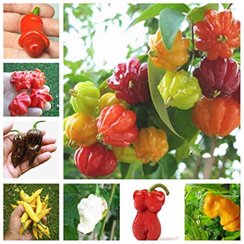 Bloom Green Co. 200 pcs/sac poivre bio-MIX COULEUR Chili Capsicum extérieur Bonsai légumes en pot plantes non-OGM pour le jardin de la maison de plantation: mixte