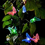 Best Heart To Heart Garden Decors - Mworld2 12 LED Solar Powered Butterfly Fiber Optic Review