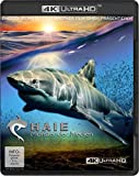 Haie - Monster der Medien (4K Ultra HD) [Blu-ray]
