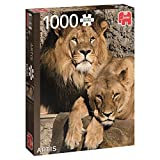 Jumbo 18341 - Artis Löwen 1000 Teile