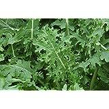 Premier Seeds Direct KAL06 - Semillas para verduras (de reliquia)