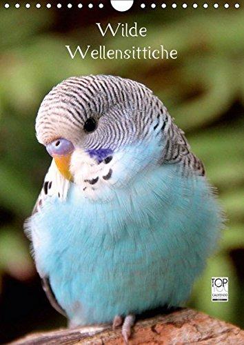 Wilde Wellensittiche (Wandkalender 2019 DIN A4 hoch): Wunderschöner Wellensittichkalender mit atemberaubend schönen und farbenprächtigen Fotografien ... (Monatskalender, 14 Seiten ) (CALVENDO Tiere)