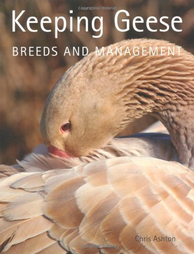 keeping-geese-breeds-and-management