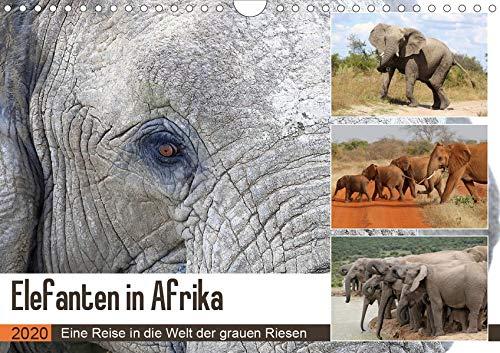 Elefanten in Afrika (Wandkalender 2020 DIN A4 quer): Kraftvolle und sanftmütige Dickhäuter...