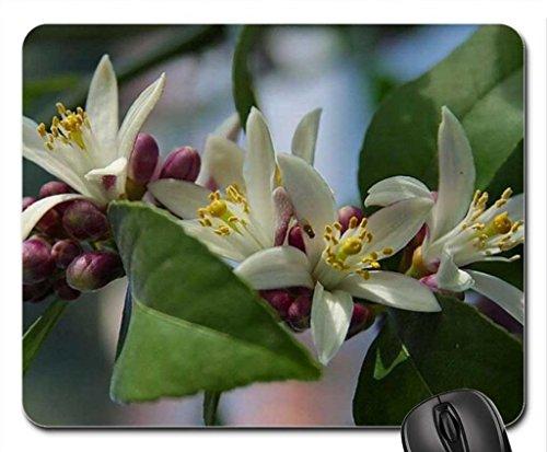 myer-limon-blossom-mouse-pad-mousepad-flowers-mouse-pad