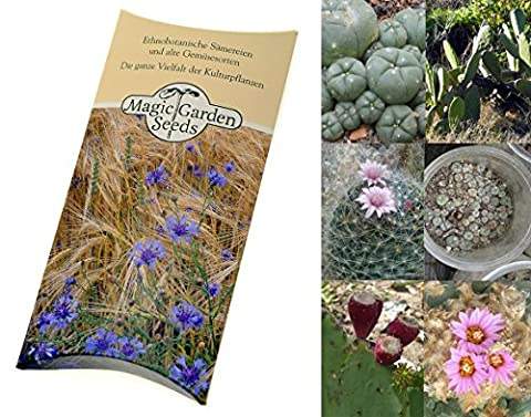 Seed kit: 'Cacti', 3 beautiful South American cactus plant varieties in a beautiful gift box