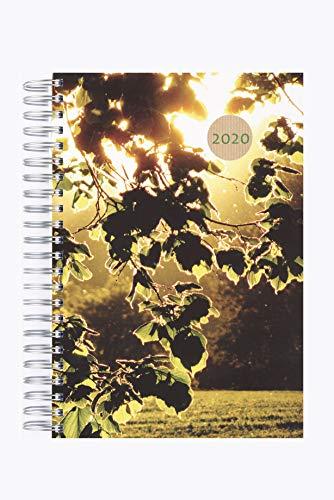 Dicker TageBuch Kalender 2020 - Blätter in der Abendsonne - 1 Tag Pro DIN A4 Seite