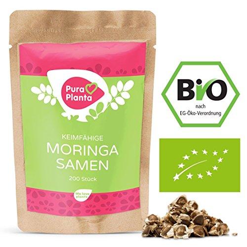 Moringa Samen Bio von Pura Planta - 200 keimfähige Moringa Samen vom Wunderbaum Moringa oleifera | Inkl. Anzuchtanleitung für deinen Moringabaum. 100% Bio Moringa Samen keimfähig.