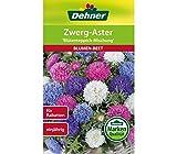 Dehner Blumen-Saatgut, Zwerg-Aster