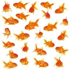 1art1 59618 fische goldfische kieselsteine und muscheln for Kieselsteine baumarkt