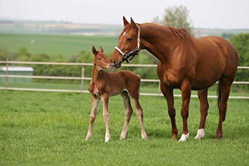 Kiepenkerl Country Horse 2118 Pâturage pour chevaux - 10 kg