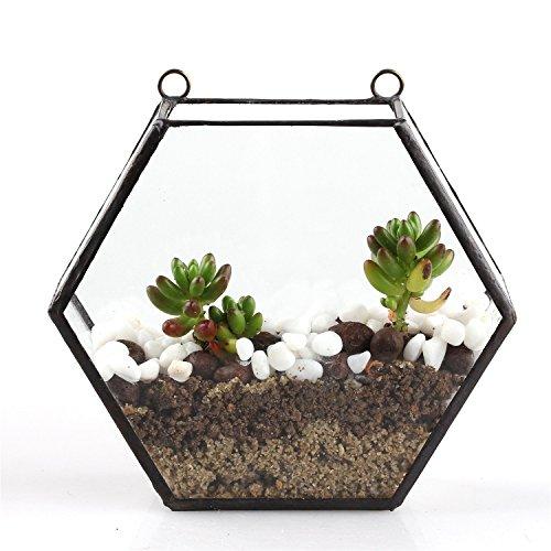 Montaggio a parete Hanging Prisma Esagonale trasparente lunghezza laterale con 2asole, 8cm, in vetro, motivo terrari Vaso per piante Cactus Fiore Vaso di vetro sottile taglia S (15,5larghezza X4.5spessore x14cm altezza montaggio a parete Tipo)