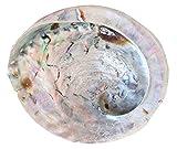 Abalone/Perlmutt Muschel (17cm) Badezimmer Seifenschale Deko Muschel