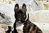 Halsband Leder Püppi Braun Rosa Glitzer S o M Lederhalsband Breit Tysons Hundehalsband (M)