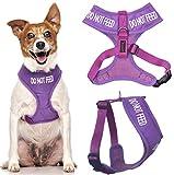 Ziehen Sie nicht lila Farbe Coded Non-Pull-Front und Rückseite D Ring Gepolsterte und wasserdichte Weste Hundegeschirr verhindert Unfälle durch andere Ihren Hund in Vorwarnleuchte (kleine Hals bis zu 31 cm Brust 36-58cm)