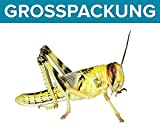 Heuschrecken 100 subadulte Wüstenheuschrecke Futterinsekten Reptilienfutter