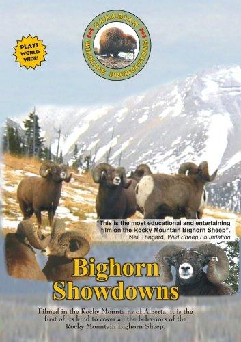 Preisvergleich Produktbild Bighorn Showdowns