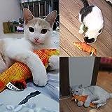 Best Cats Toys - Pets Empire 26CM Catnip Toys Simulation Plush Fish Review