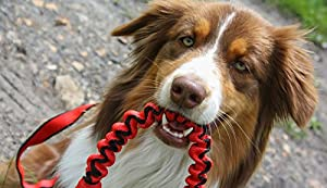 Robuste pour Chien Anti chocs pour absorber Laisse pour chien Promenade/Dressage élastique/printemps Laisse